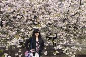 Pretty pretty background of sakura <3