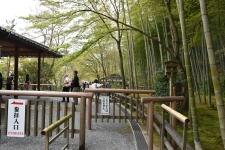 Arashiyama Bamboo Park