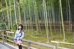 More bamboos