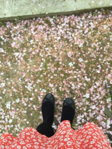 Pretty cherry blossom petals falling down